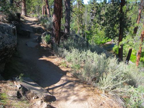 Some awesome trail running territory . Who can complain about the combo of Old growth ponderosas and live water on this stretch of the Shevlin Park Loop Trail.