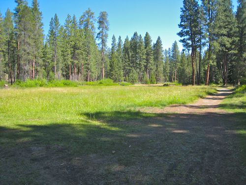 Fremont Meadow in Bend, Oregon's Shevlin Park