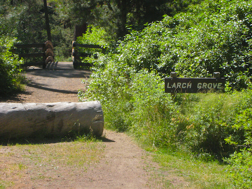 """The larch grove"" and foot bridge over Tumalo Creek in Shevlin Park"