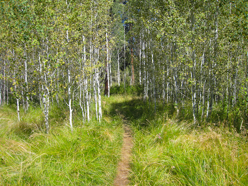 Trail entering the aspen grove near the trail head for the Shevlin Park Loop Trail