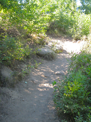 A deceptively steep trail up to the dry, east side of Tumalo Creek.