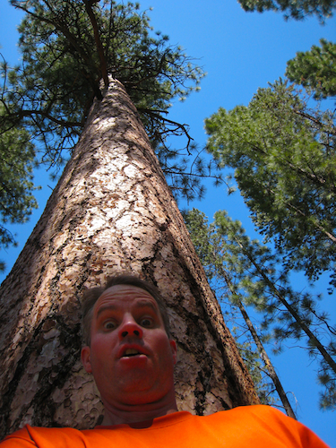 Trail runner in awe of old growth ponderosas in Bend Oregon's Shevlin Park