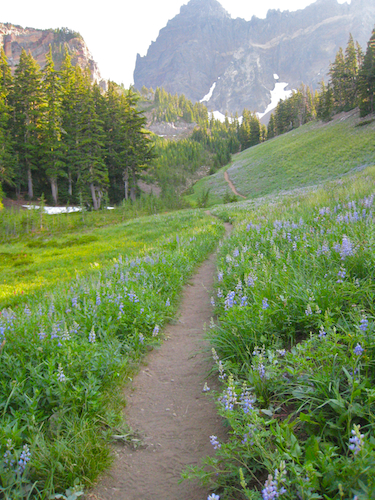 Trail to Three Fingered Jack in the ORegon Cascades