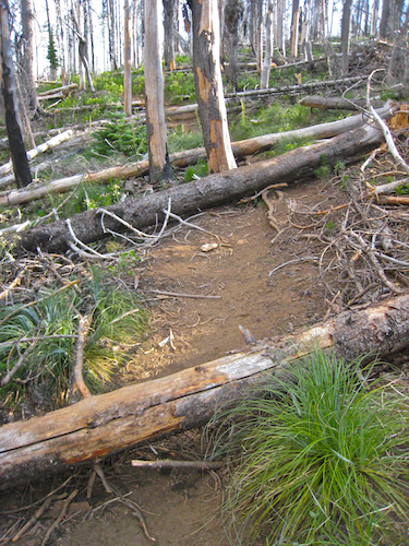 Deadfall littering the trail on the way to Canyon Creek Meadow.