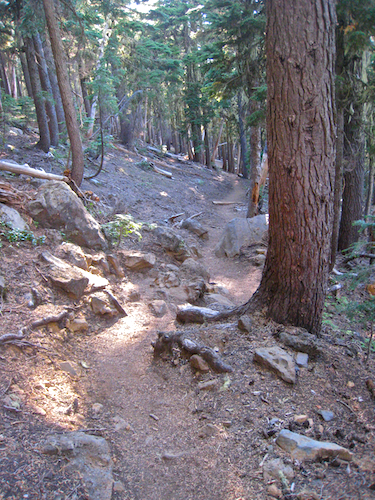 Rough descending trail.