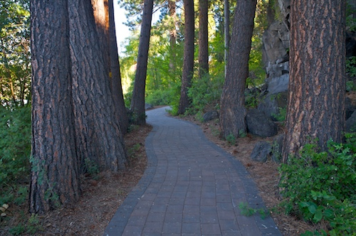Walkway through ponderosa trees in Pioneer park