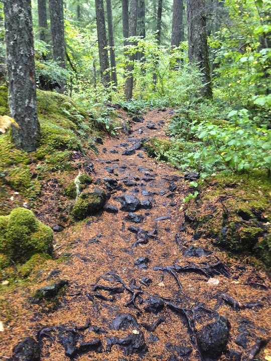 Lava strewn section of the McKenzie River Trail
