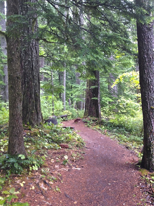 Flat section of the McKenzie River Trail, near the trailhead