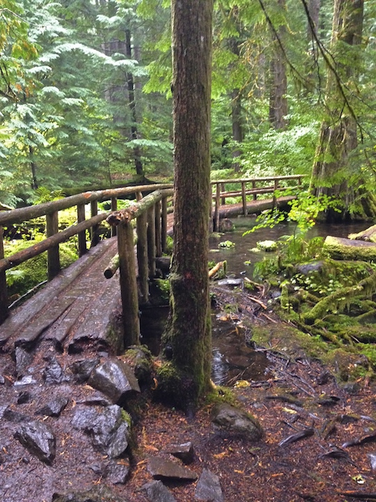 Footbridge along McKenzie River Trail